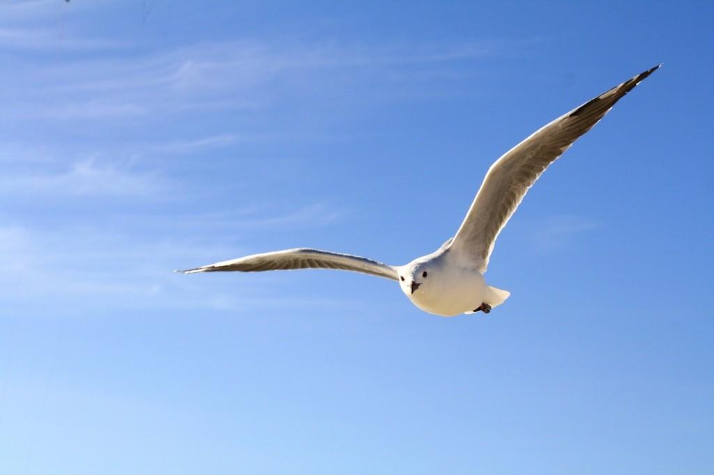 gull-456727_1280